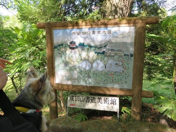 10J03 森林浴 0421