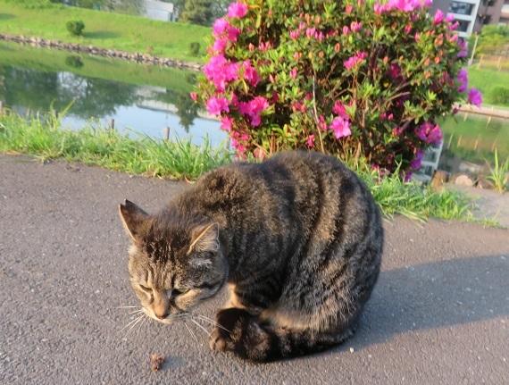 6B08 猫は食わねど高楊枝 0419