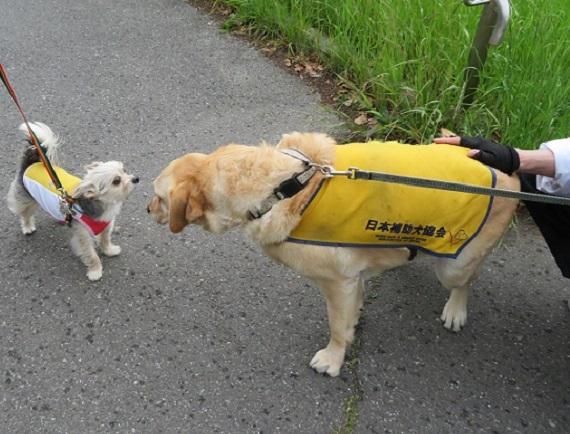 9W02 盲導犬 0513