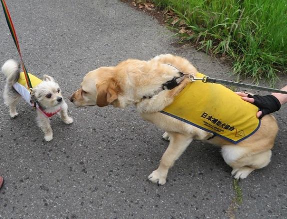 10W03 盲導犬 0513
