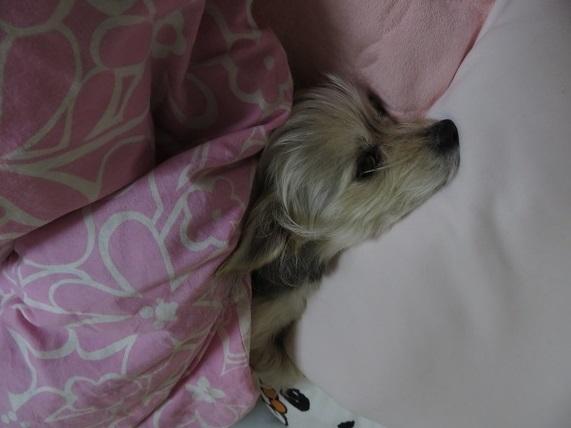 ・Z01 ママの枕 0313