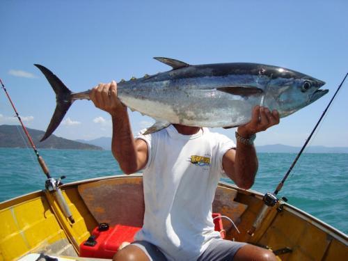 マグロ釣り 縮小