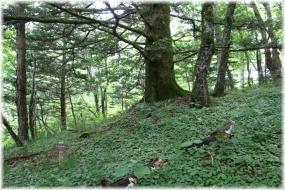 180630E 011乙女高原の森32