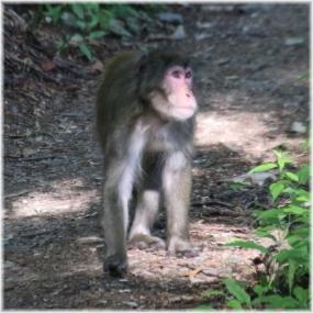 180716E 014猿A@妙法SQ
