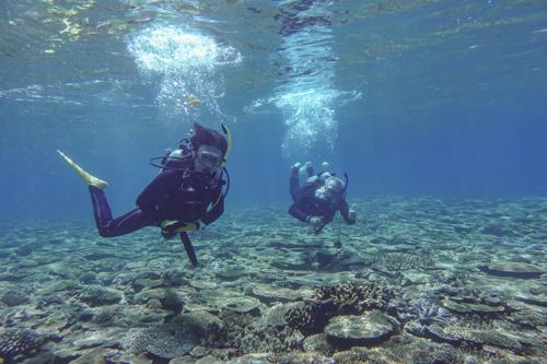 瀬底島のサンゴ礁