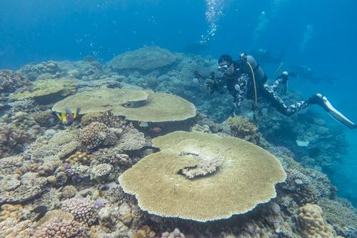 水納島 サンゴ