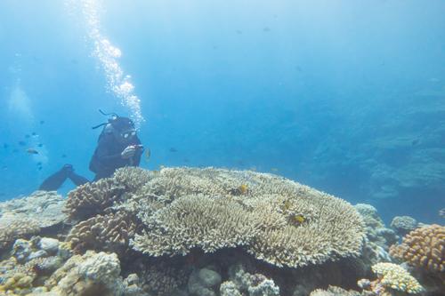 本部町 サンゴ礁