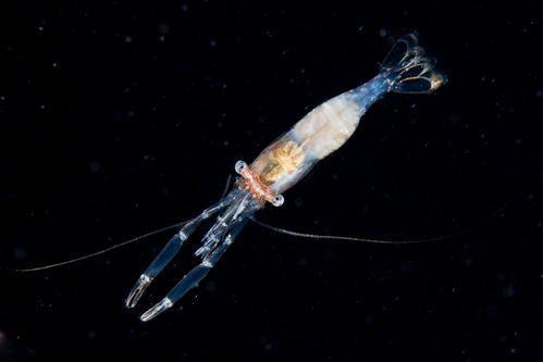 浮遊生物⑨