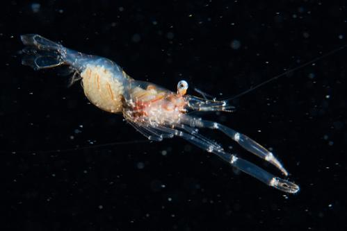 浮遊生物⑩