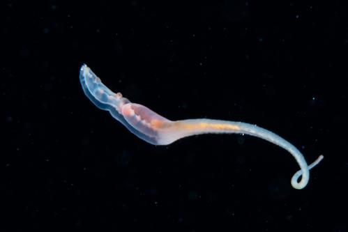 浮遊生物㉑