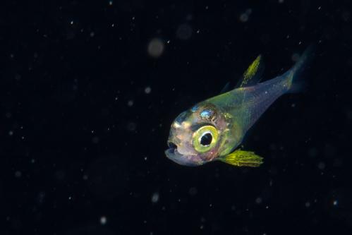 浮遊生物㉓