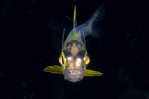 浮遊生物㉔