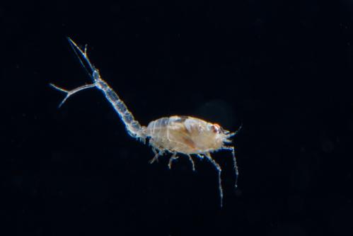 浮遊生物⑧