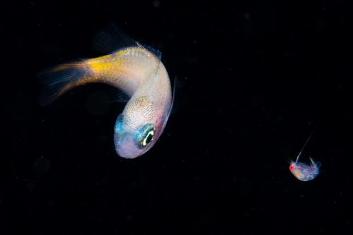 浮遊生物⑳