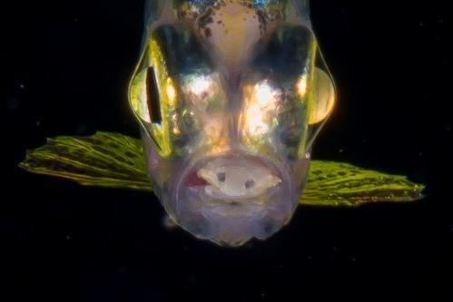 浮遊生物㉕