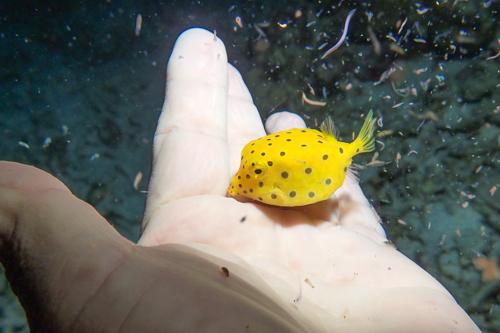 サンゴの産卵 2013年-2