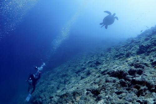 アカウミガメ feeldive