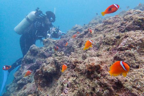 台風7号 diving 2