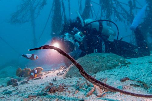 台風7号 diving 3