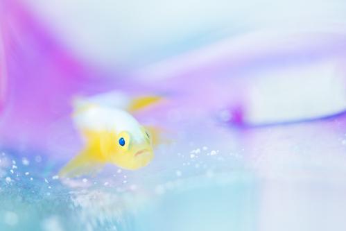 夏前に瀬底島で撮っておきたい魚達