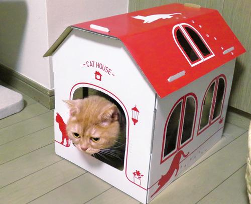 きなこin猫小屋