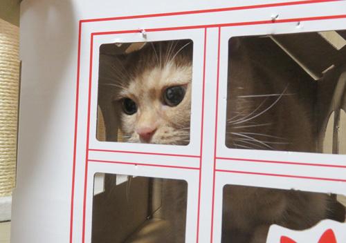 窓枠を嗅ぐきなこ