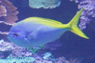 ユメウメイロ(海卵)