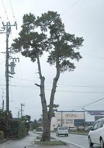 061212袋井宿一本松