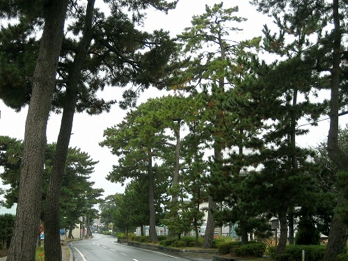 061212袋井宿松並木