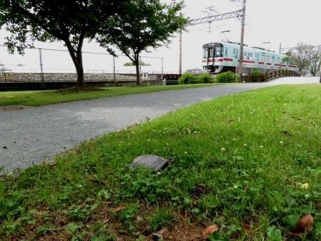 石丸公園赤アジサイ 2018-06-07 096