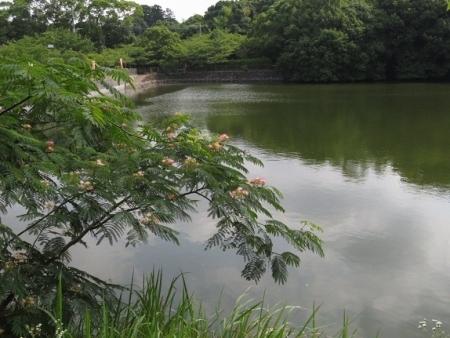 久留米捩花 2018-06-24 009