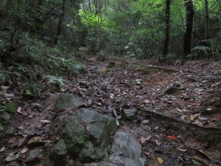コクラン清水山 2018-07-01 014