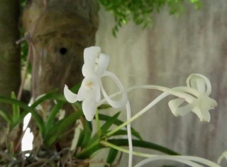 白い花玄関 2018-07-04 012