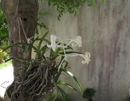 白い花玄関 2018-07-04 002