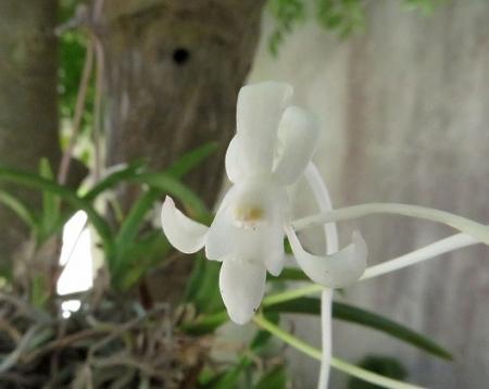 白い花玄関 2018-07-04 006