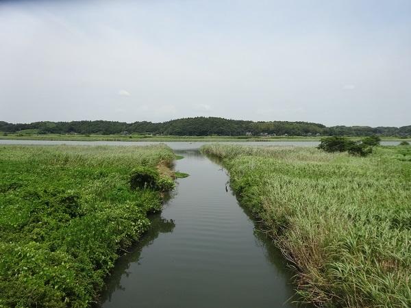 180721印旛沼 (2)