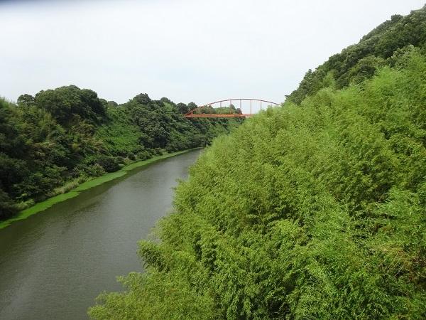 180721印旛沼 (10)