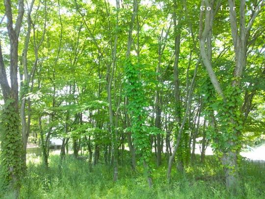 green 180525
