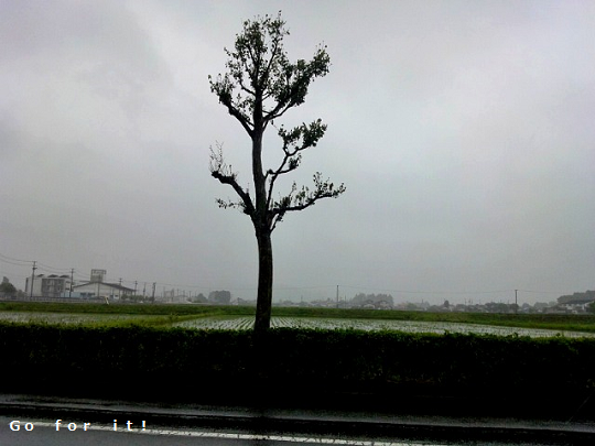 梅雨入り 180611