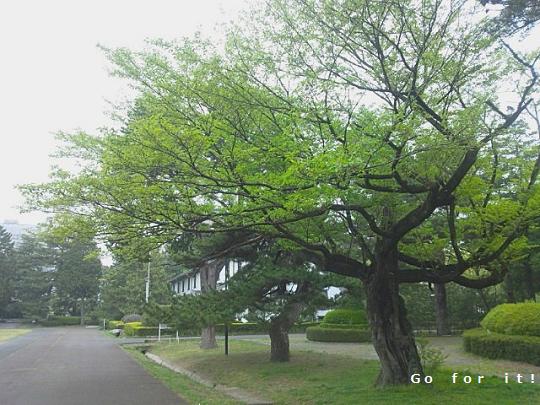 公園 180621