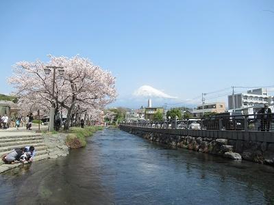 桜と富士山と神田川