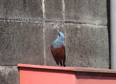 何の鳥? 1