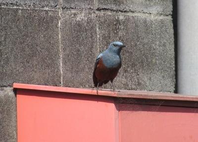 何の鳥? 2
