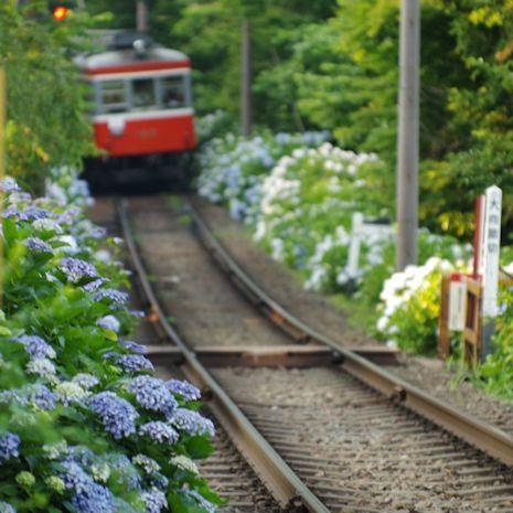 あじさい電車H30-1