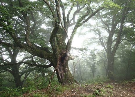 霧の外輪山
