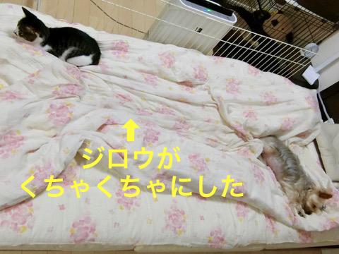 180703-3saya-jiro