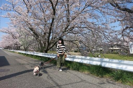 3-29矢散歩