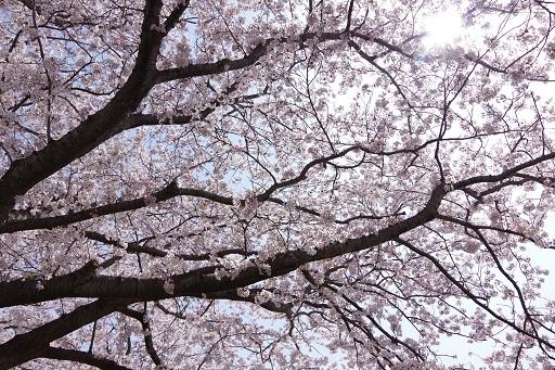 3-29矢桜空