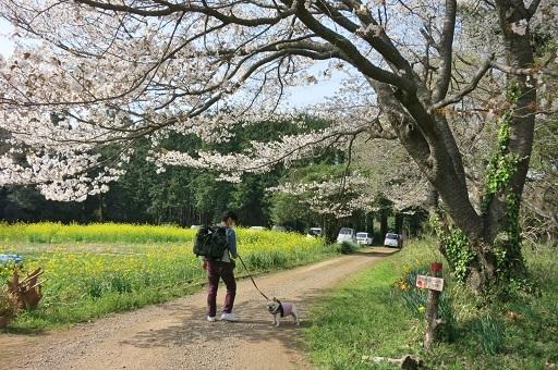 3-29い散歩