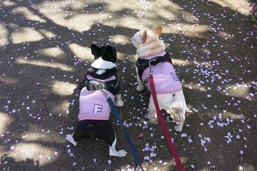 4-10花びら散歩